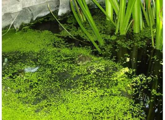 Can You Find the Bull Frog?