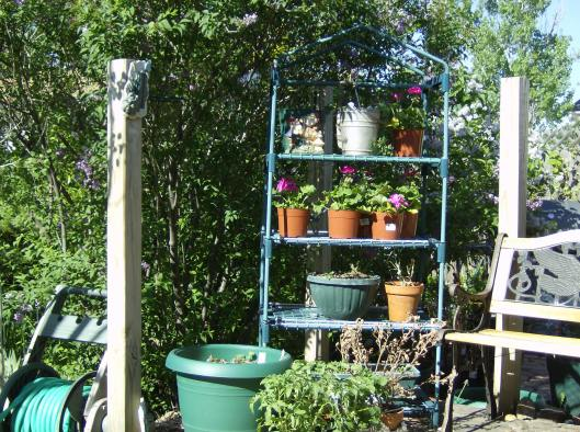 Plant Rack Doubles as a Greenhouse in Spring