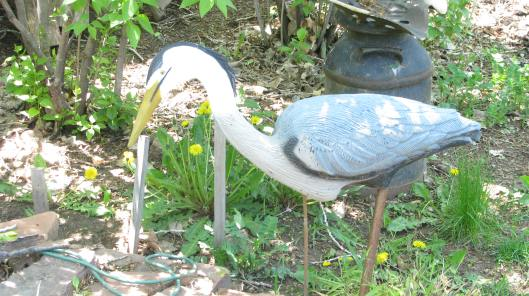 Blue Heron Statue. Looks quite real from a distance. We had to get this statue because a real Blue Heron came and ate our Bullfrogs.