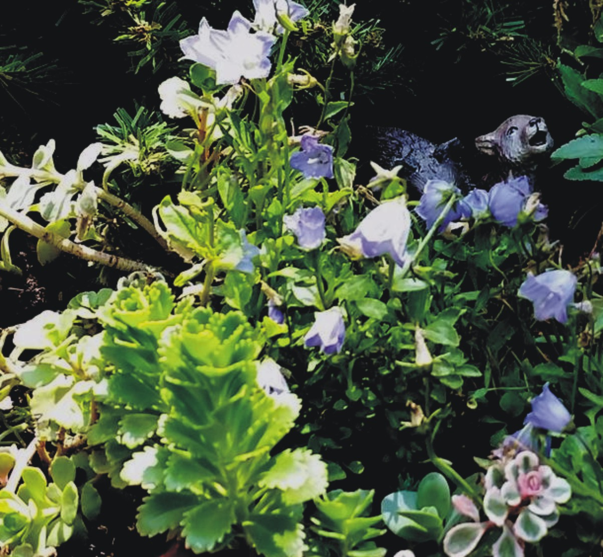 Plants Used In Fairy Gardens My Enchanting Whims